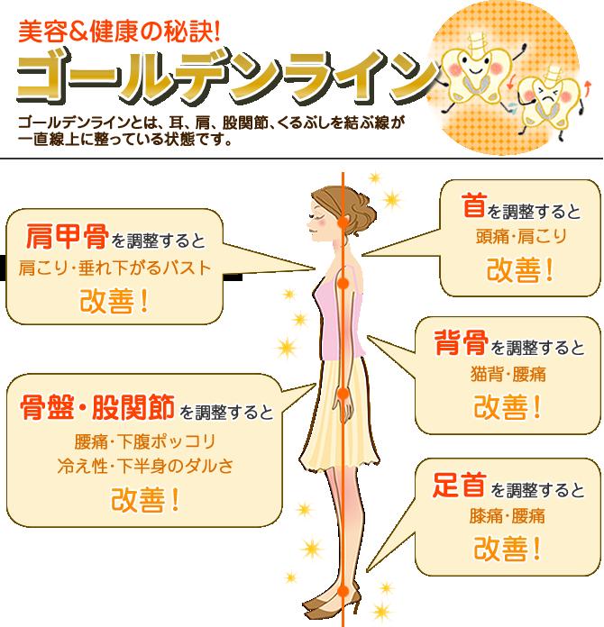 美容&健康の秘訣!ゴールデンライン
